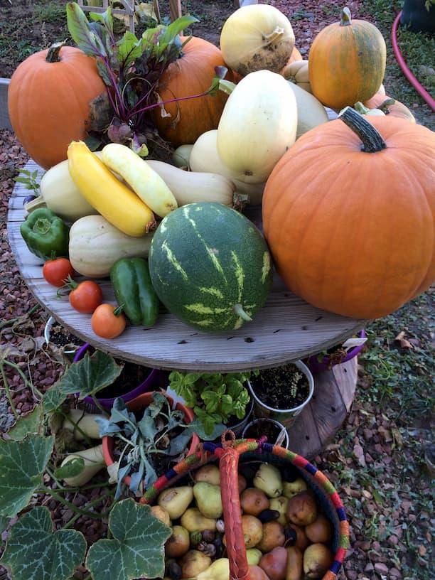 Harvest Fall Lots of wellness
